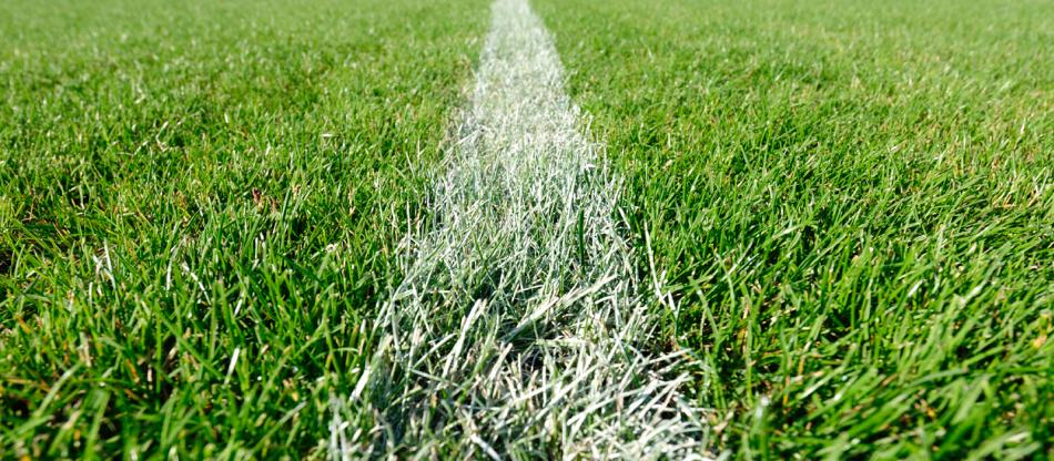 Turfgrass on sports field